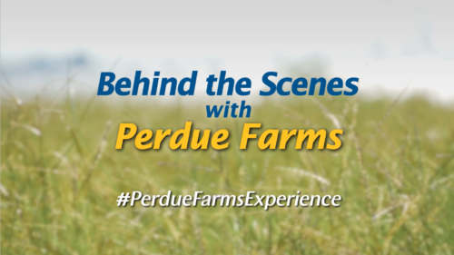 BTS with Perdue Farms 2019
